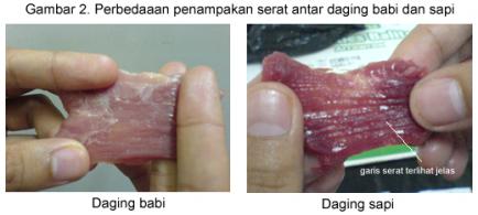 serat-babi1
